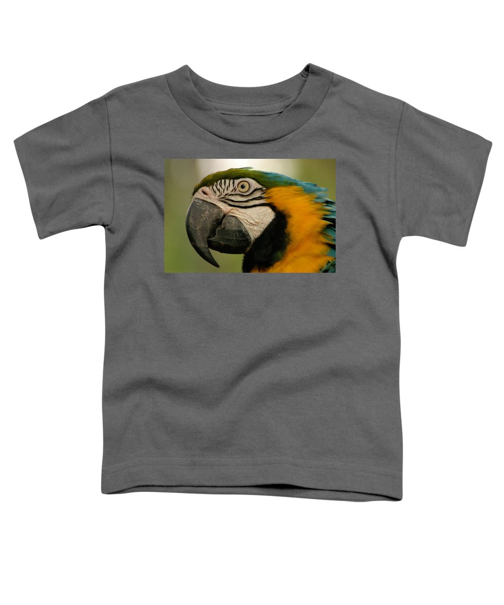 Parrot Toddler T-Shirt featuring the photograph Blue Gold Macaw South America by Ralph A Ledergerber-Photography