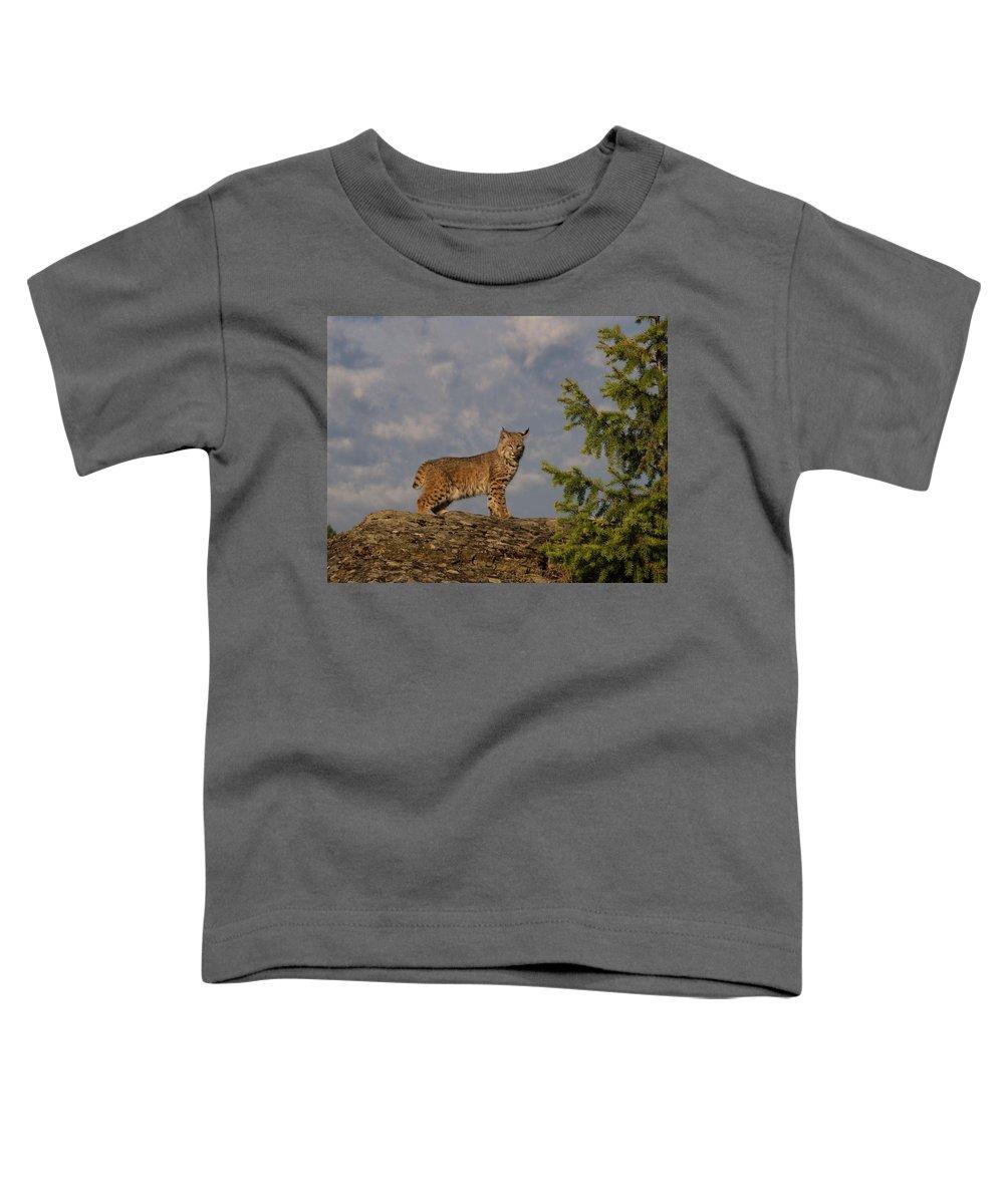 Bobcat Toddler T-Shirt featuring the photograph Curious bobcat by Roy Nierdieck