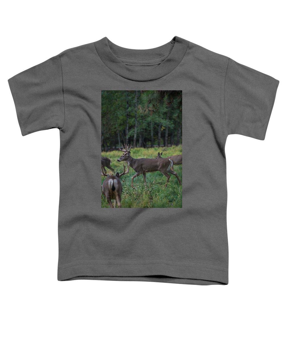 Deer Toddler T-Shirt featuring the photograph Deer herd by Roy Nierdieck