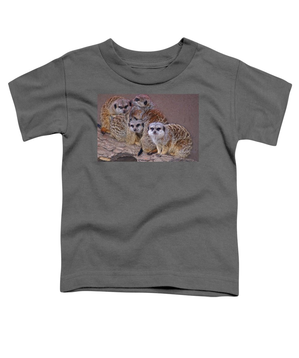 Mer Cats Toddler T-Shirt featuring the photograph Freezing Meer Cats by Heather Coen