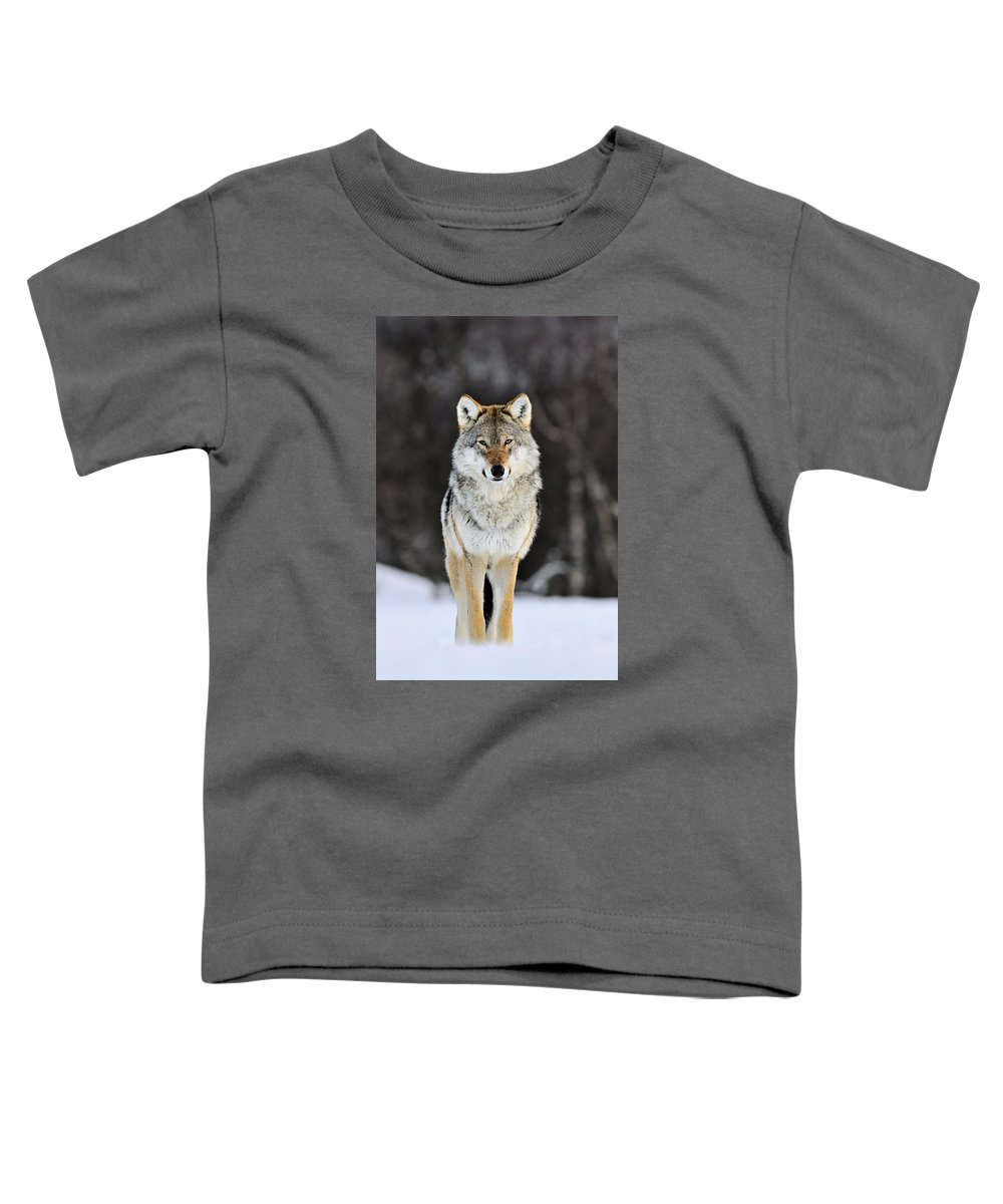 Mp Toddler T-Shirt featuring the photograph Gray Wolf In The Snow by Jasper Doest