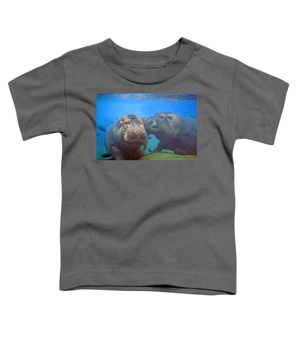 Animals Toddler T-Shirt featuring the photograph Hippos In Love by Steve Karol