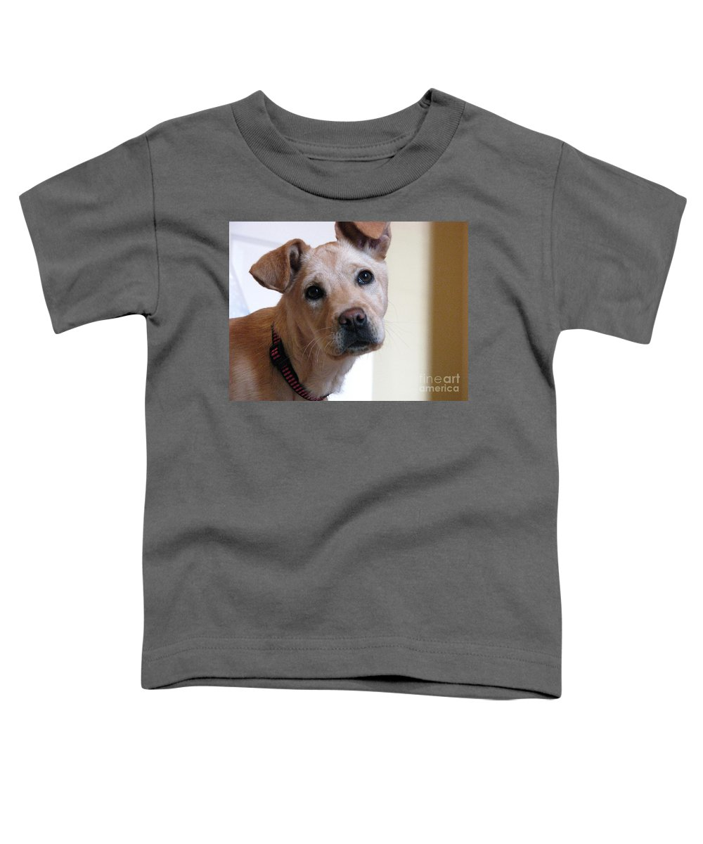 Dog Toddler T-Shirt featuring the photograph Honey by Amanda Barcon