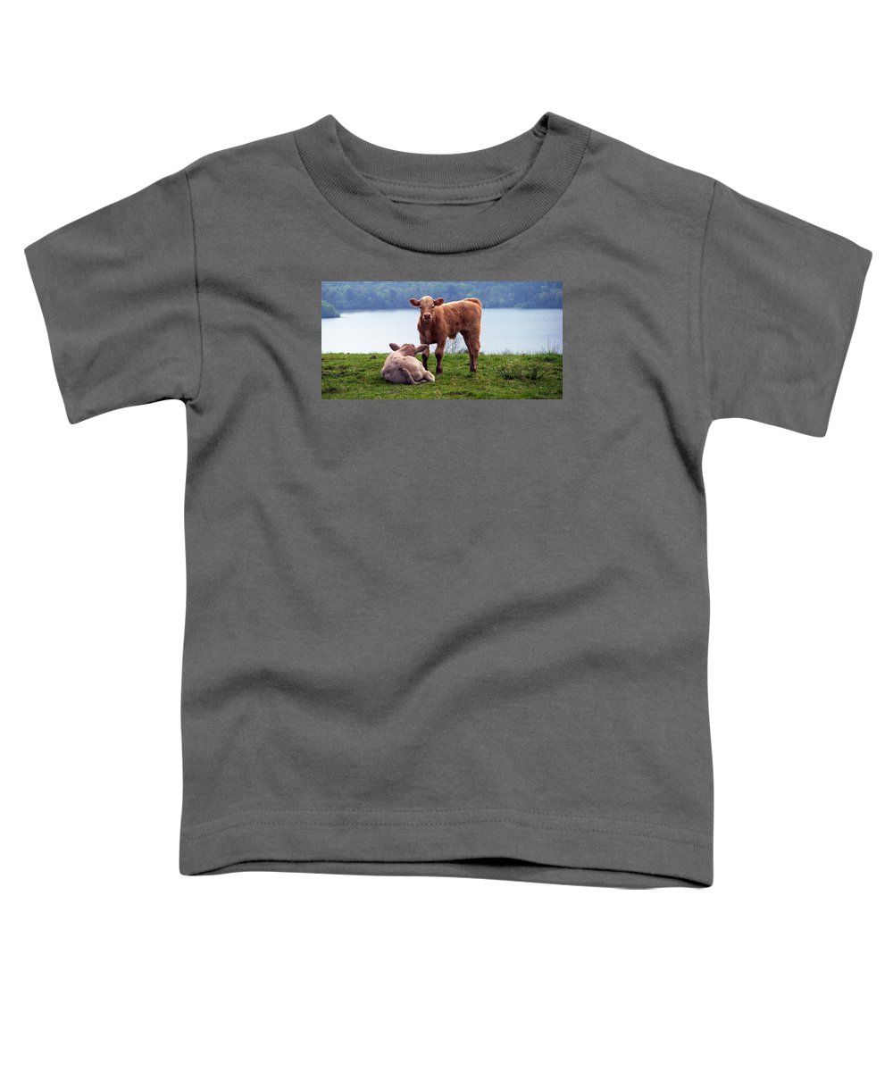 Ireland Toddler T-Shirt featuring the photograph Irish Calves At Lough Eske by Teresa Mucha