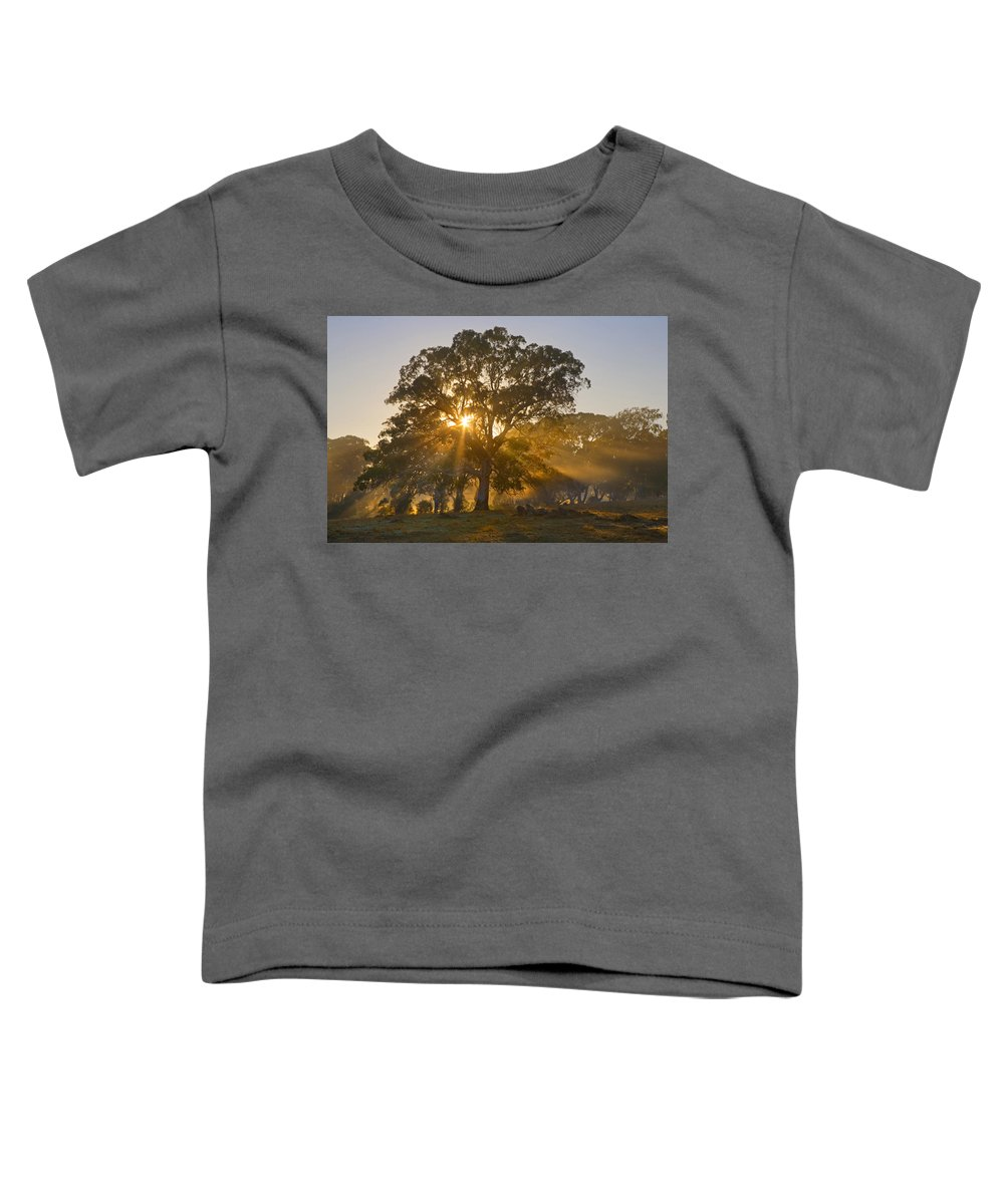 Tree Toddler T-Shirt featuring the photograph Let There Be Light by Mike Dawson