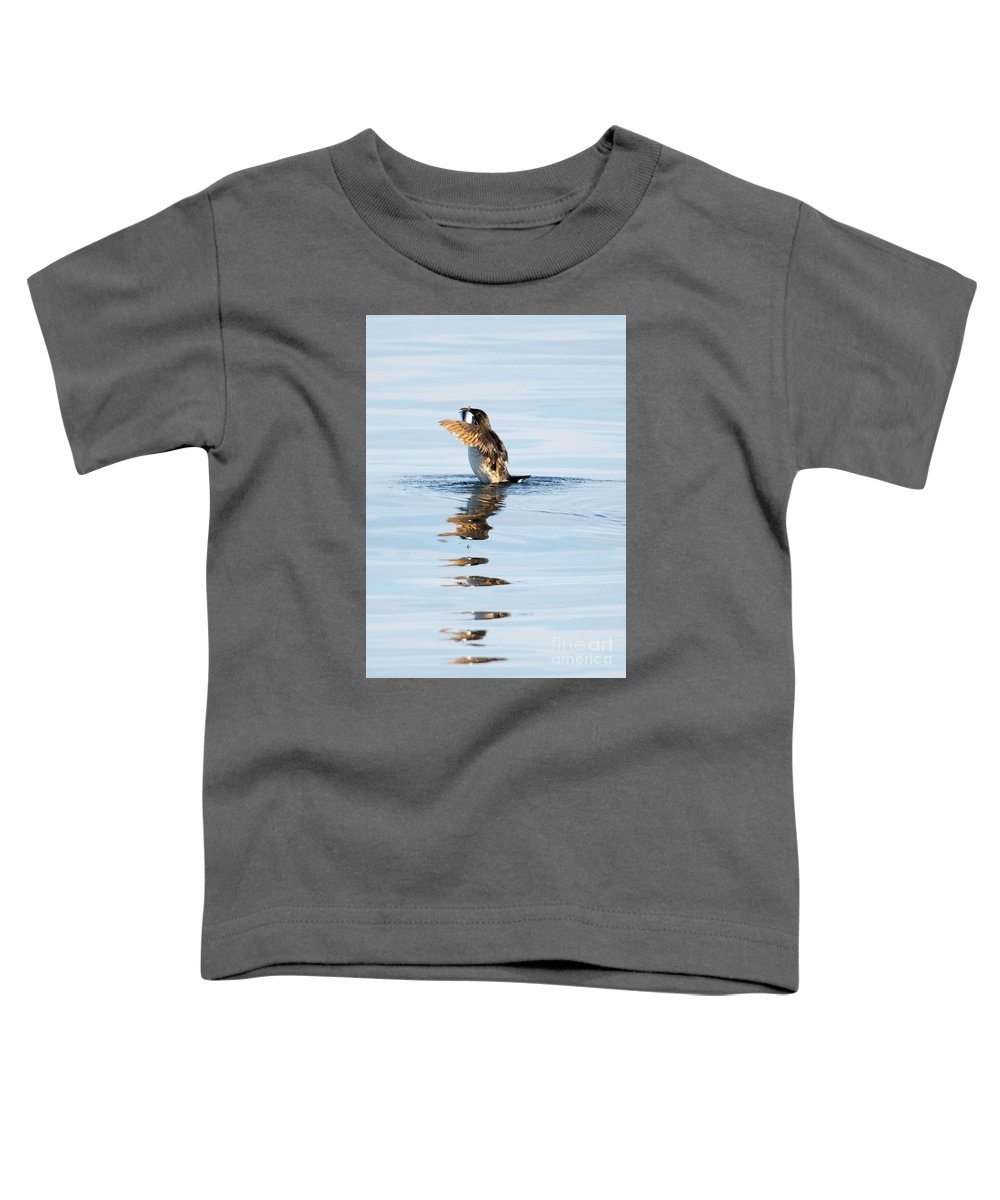 Auklets Toddler T-Shirts
