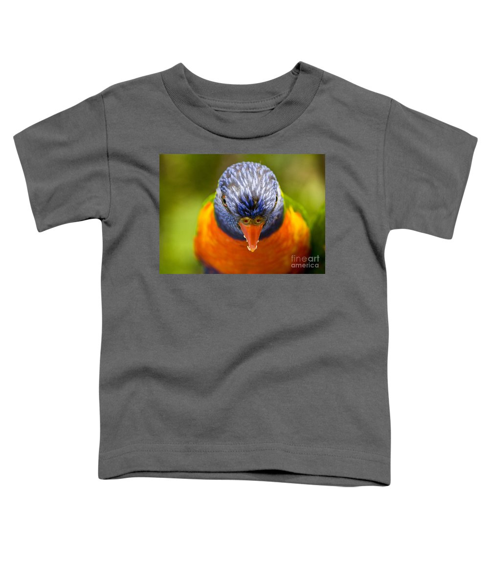 Rainbow Lorikeet Toddler T-Shirt featuring the photograph Rainbow Lorikeet by Sheila Smart Fine Art Photography