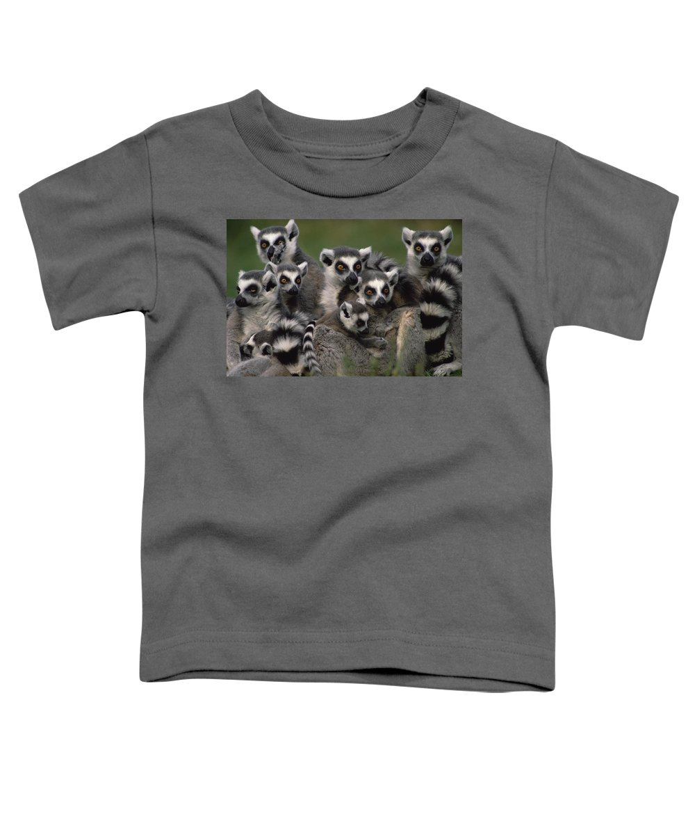 Mp Toddler T-Shirt featuring the photograph Ring-tailed Lemur Lemur Catta Group by Gerry Ellis
