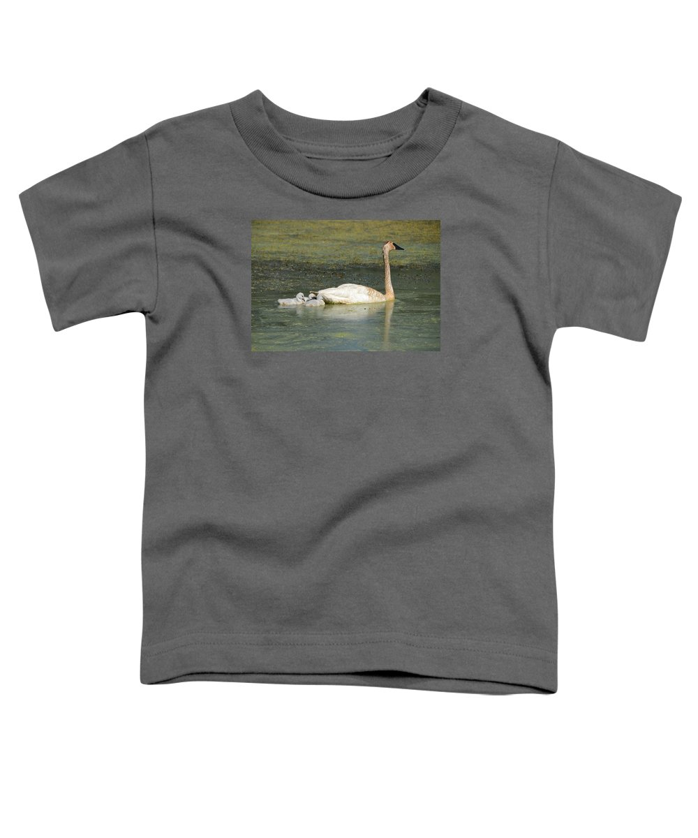 Swan Toddler T-Shirt featuring the photograph Swimming Swans by Whispering Peaks Photography