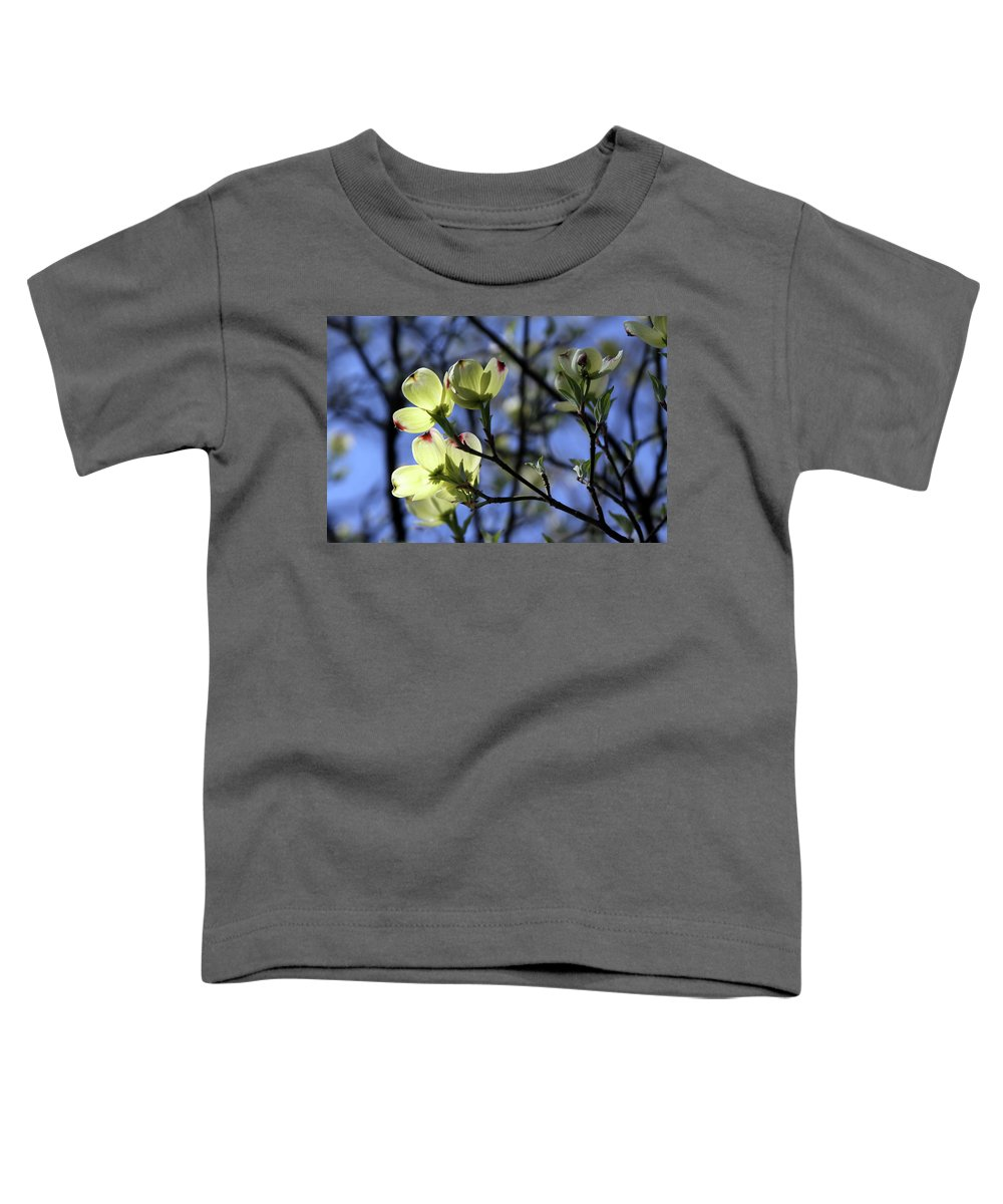 Dogwood Tree Toddler T-Shirt featuring the photograph Dogwood in Sunlight by John Lautermilch