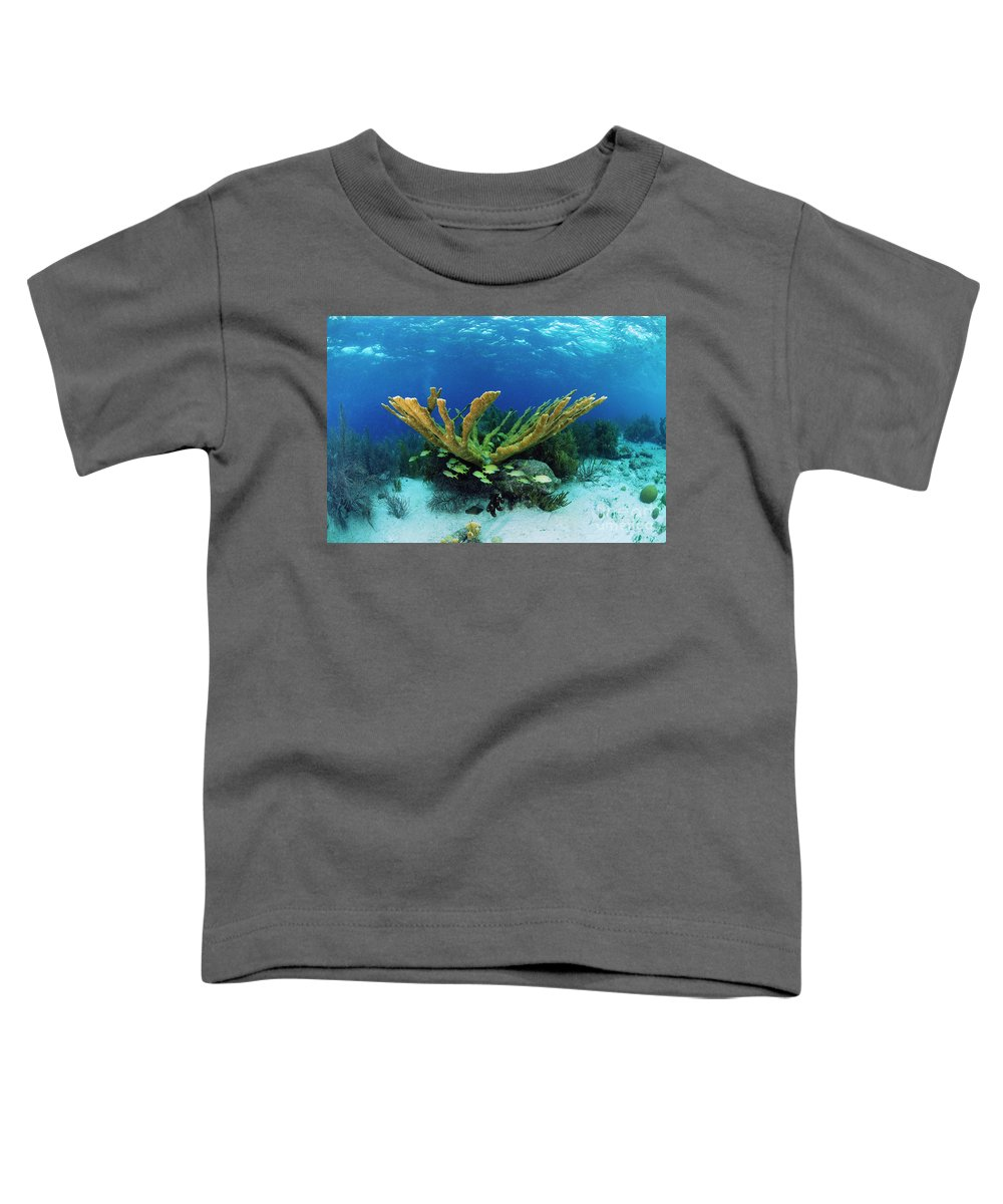 70007084 Toddler T-Shirt featuring the photograph Elkhorn Coral by Hans Leijnse