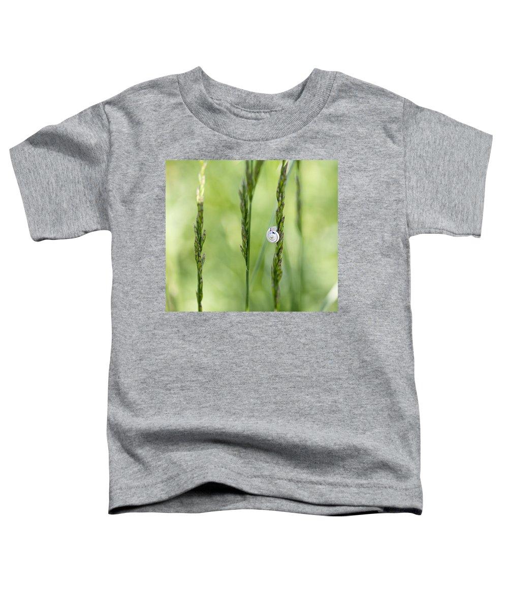 Pests Toddler T-Shirts