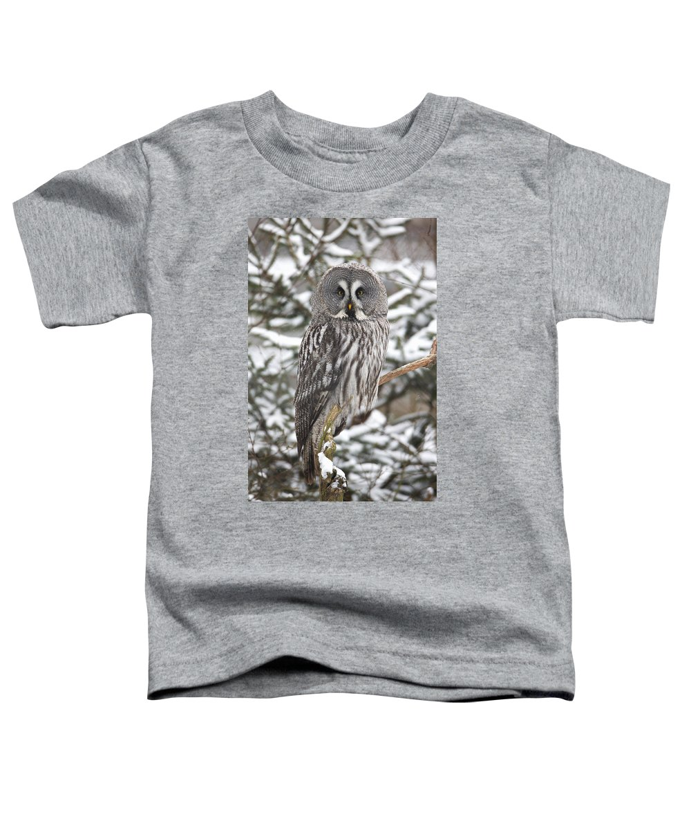 Feb0514 Toddler T-Shirt featuring the photograph Great Gray Owl In A Tree Germany by Duncan Usher