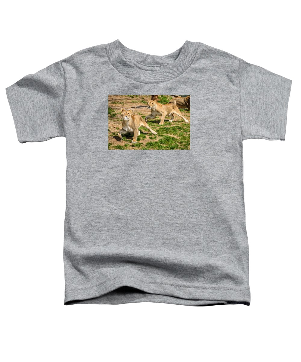 Lion Toddler T-Shirt featuring the photograph Hokie Pokie by Pat Scanlon