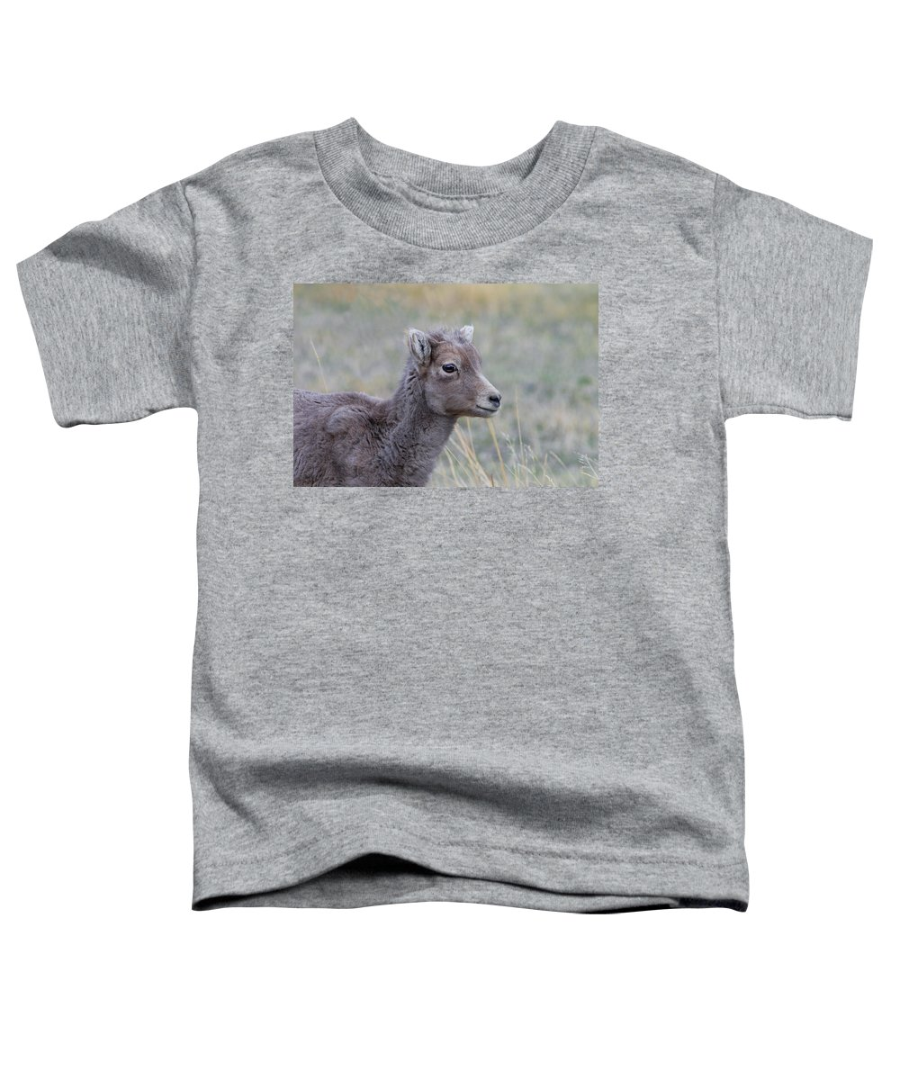 Rocky Mountain Bighorn Sheep Toddler T-Shirt featuring the photograph Just Waitin by Rich Franco