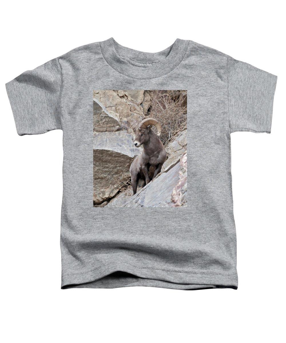 Rocky Mountain Big Horn Ram Toddler T-Shirt featuring the photograph Rocky Mountain Big Horn Sheep Ram by Gary Langley