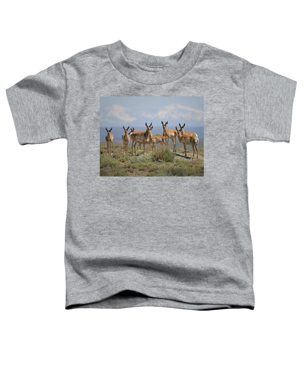 Antelope Toddler T-Shirt featuring the photograph Antelope by Heather Coen