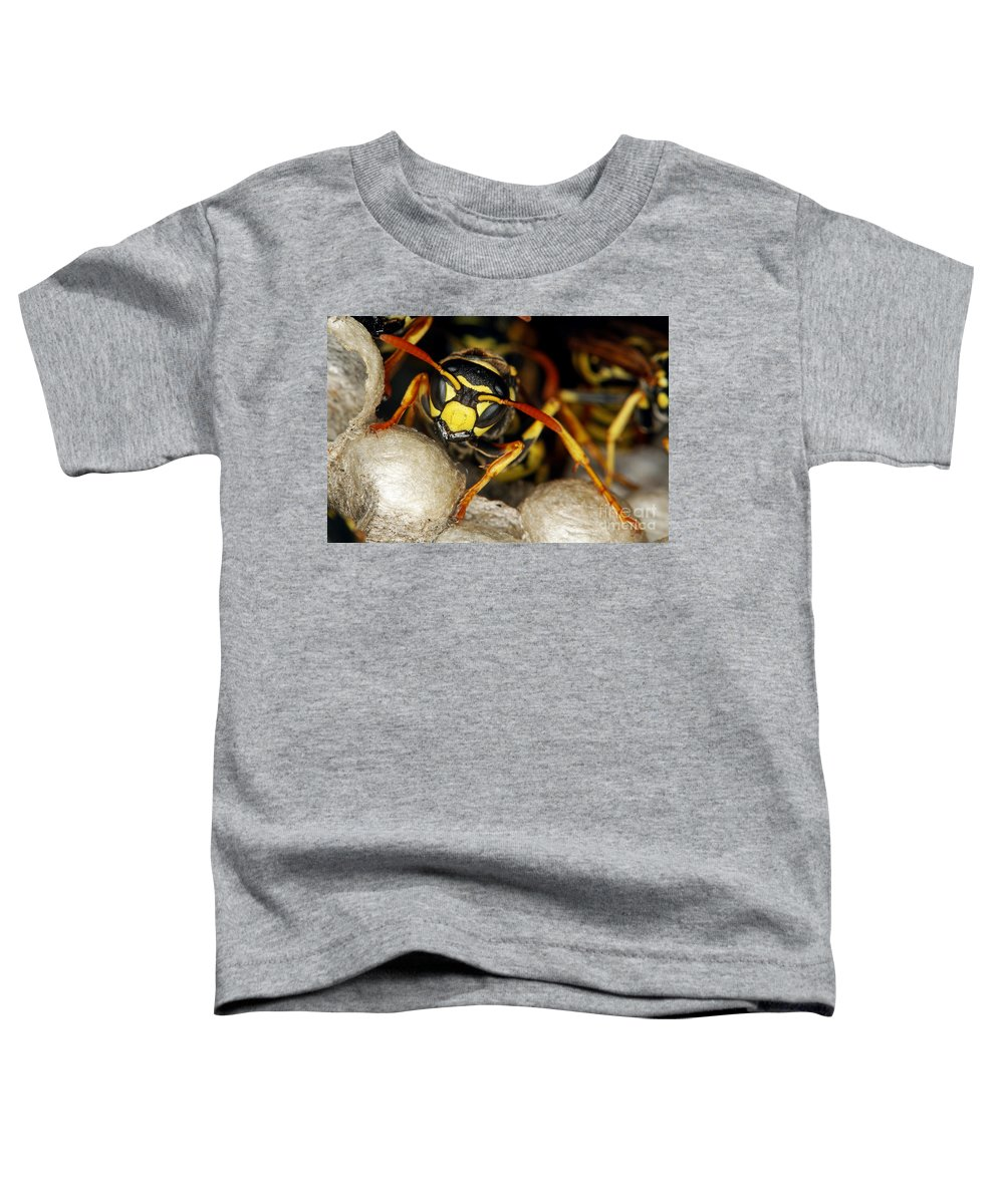European Hornet Toddler T-Shirts