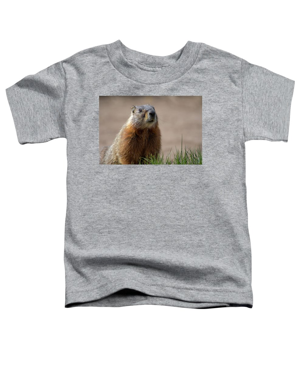 Wyoming Toddler T-Shirt featuring the photograph Fearless by Frank Madia