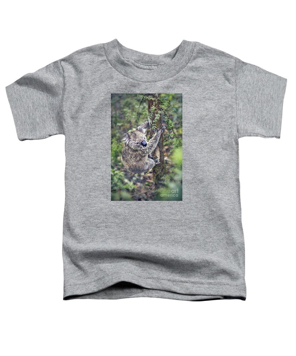 Koala Photographs Toddler T-Shirts