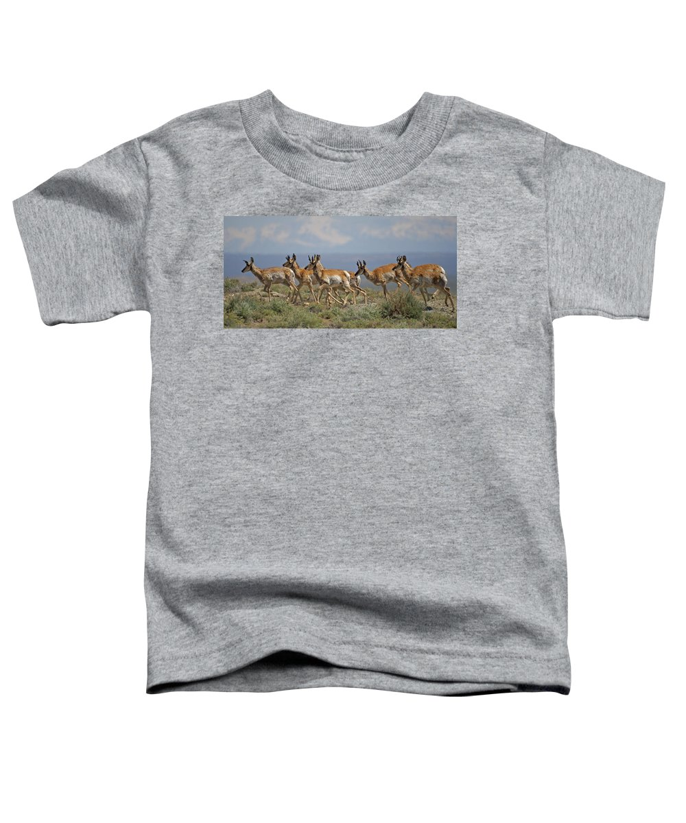 Pronghorn Toddler T-Shirt featuring the photograph Pronghorn Antelope Running by Heather Coen