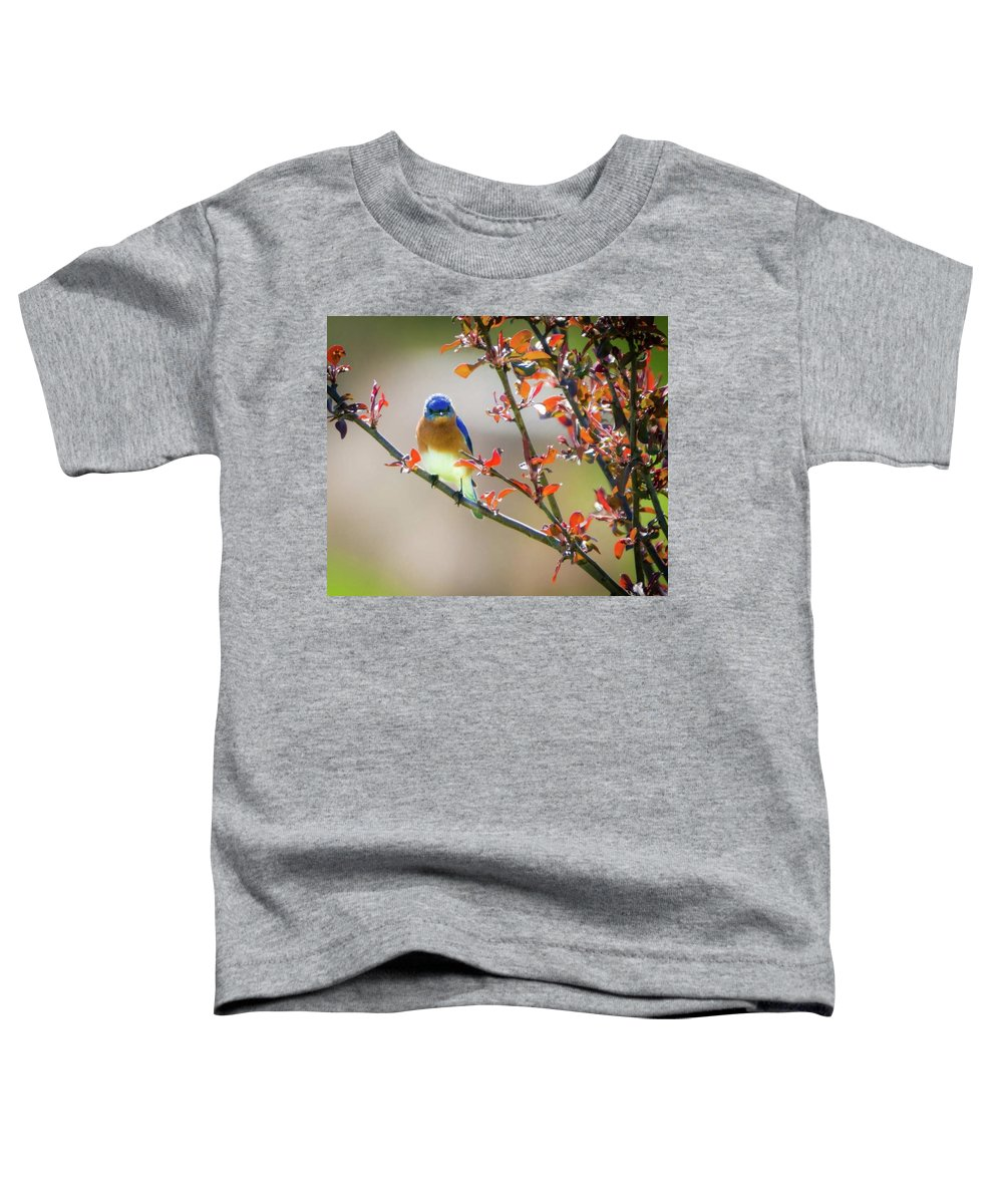 Eastern Male Bluebird Toddler T-Shirt featuring the photograph The Bluebird by Heather Hubbard