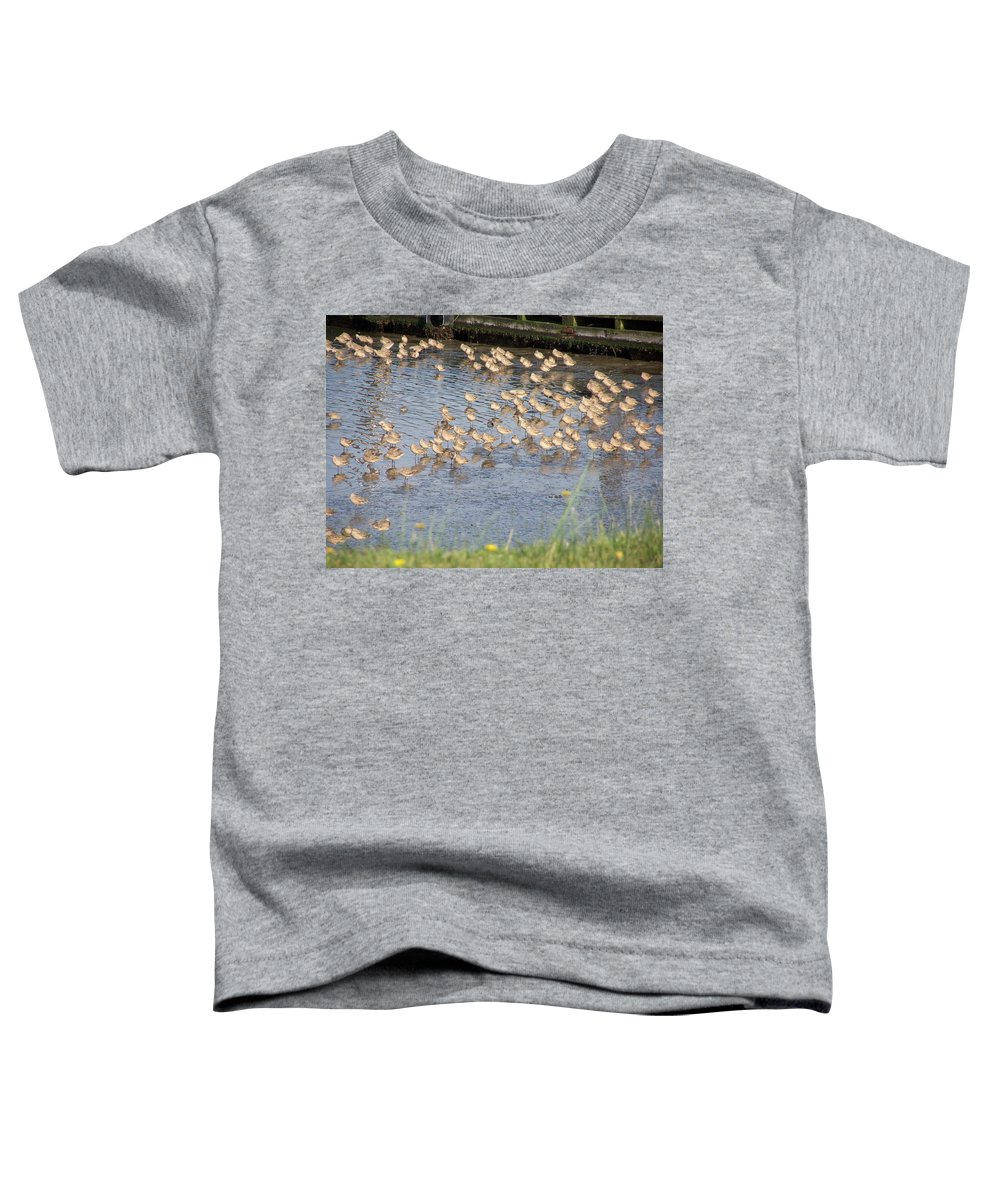 Seabirds Toddler T-Shirt featuring the photograph The Plovers by Laurie Kidd