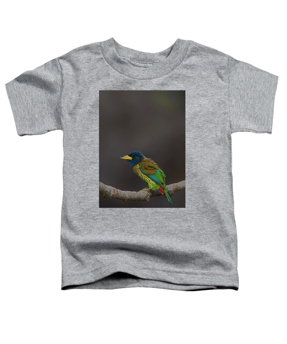 Bird Images For Print Toddler T-Shirt featuring the photograph Great Barbet by Uma Ganesh