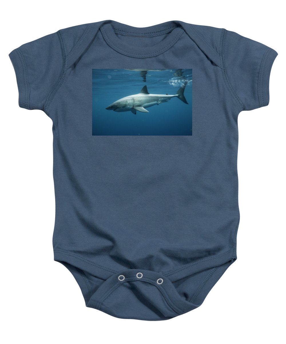 Animal Baby Onesie featuring the photograph An Underwater Profile View Of A White by Chris Ross