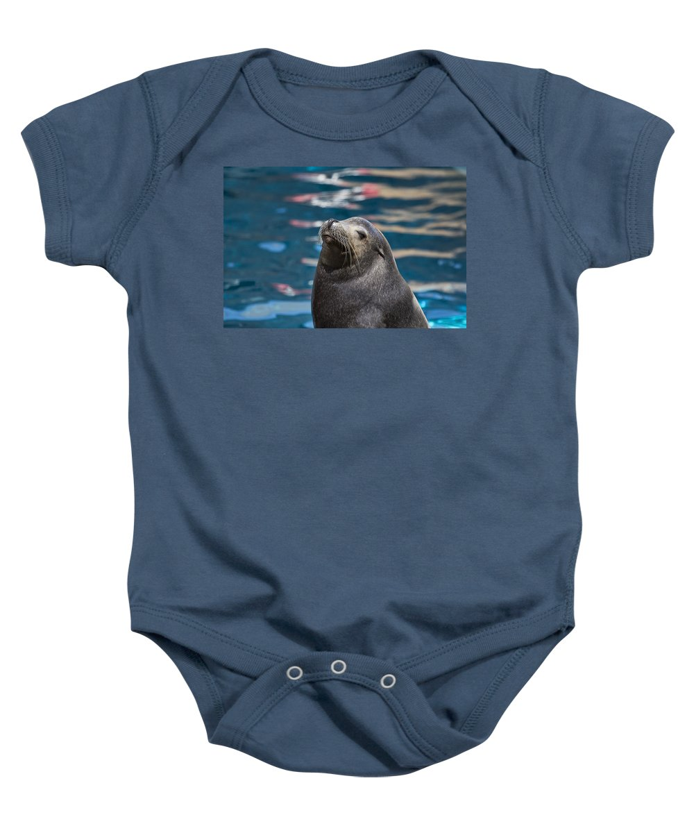 California Sea Lion Baby Onesie featuring the photograph Looking Up by Douglas Barnard