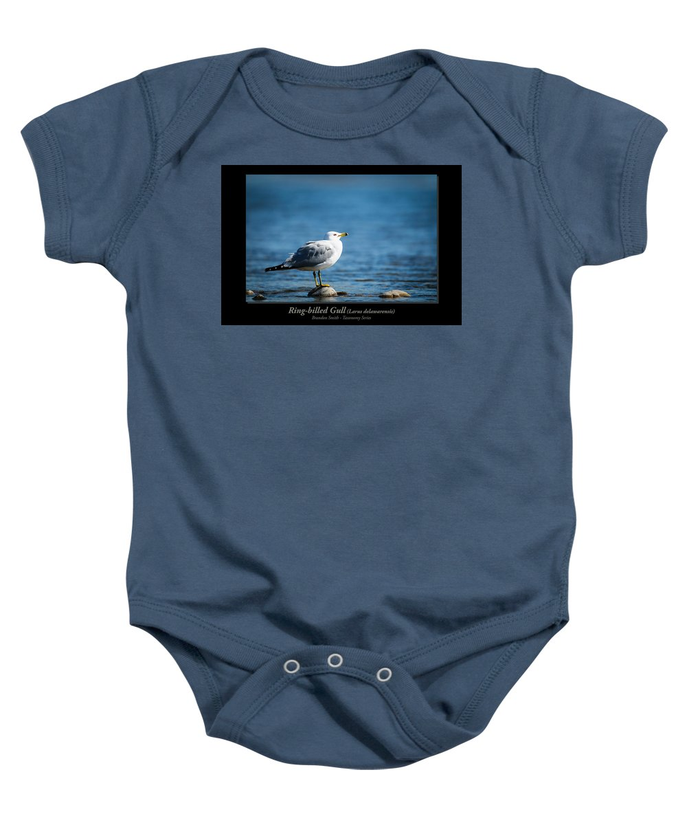 Alberta Baby Onesie featuring the photograph Ring-billed Gull by Brandon Smith