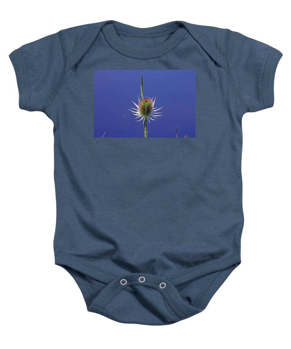Cotswolds Baby Onesie featuring the photograph Single Teasel by Tony Murtagh