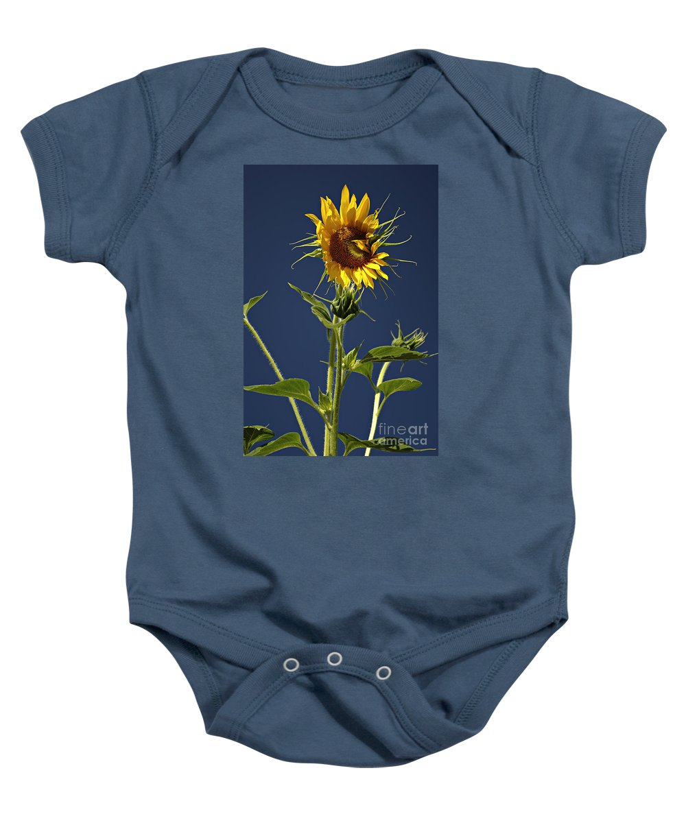 Background Baby Onesie featuring the photograph Sunflowers by Zoran Berdjan