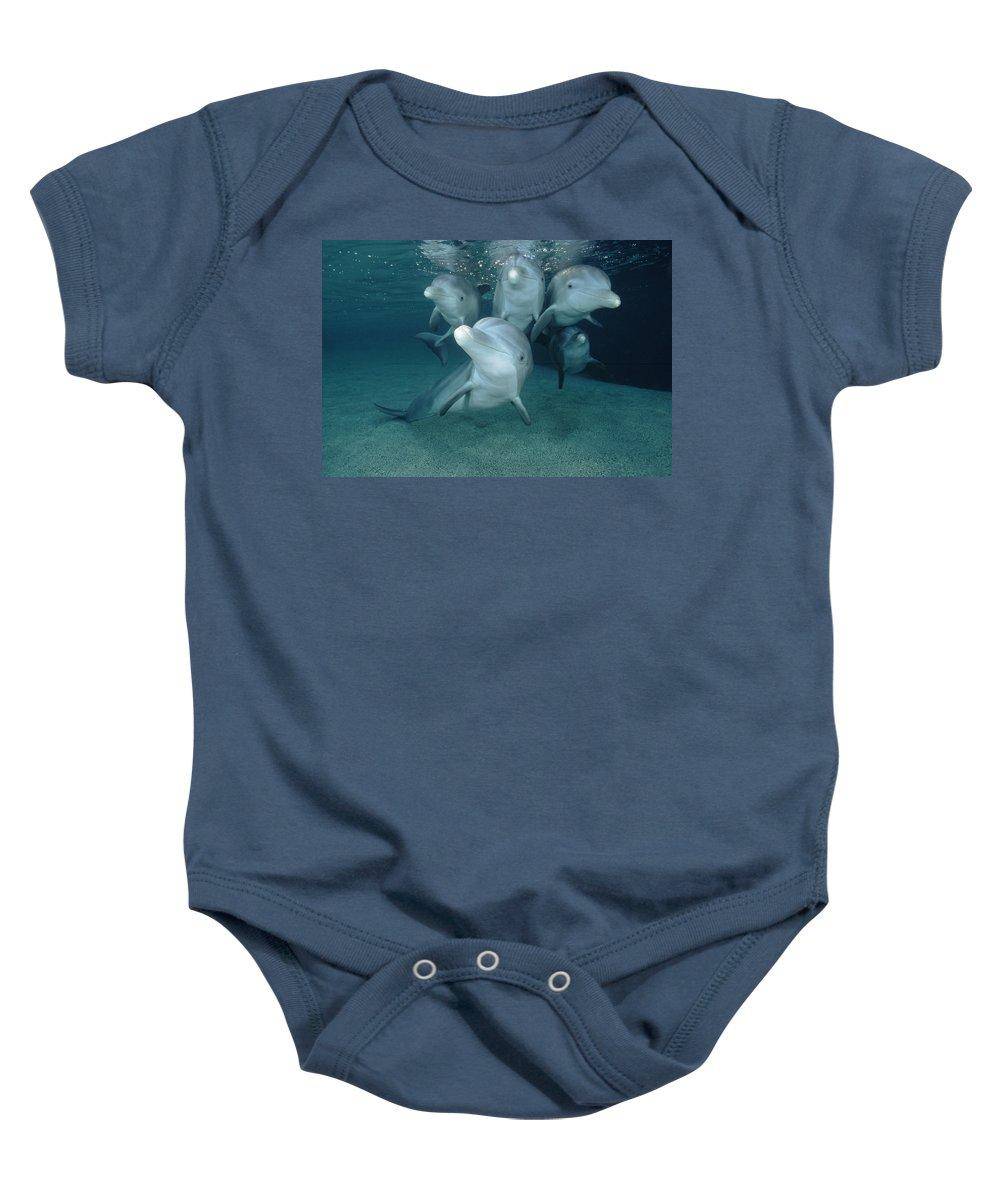 00087619 Baby Onesie featuring the photograph Bottlenose Dolphin Underwater Pair by Flip Nicklin