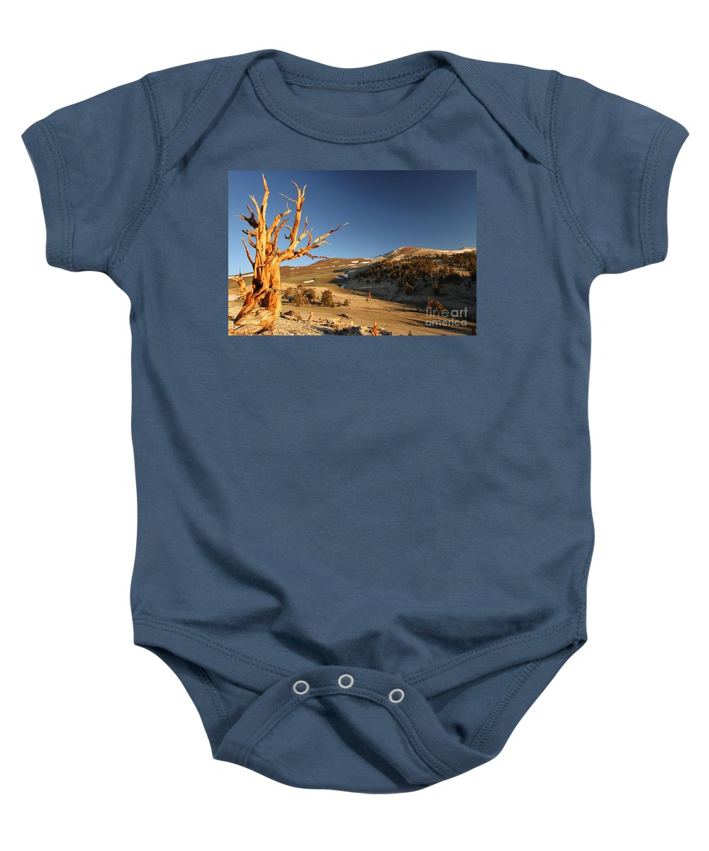Bristlecone Pine Tree Baby Onesie featuring the photograph Ancient by Adam Jewell