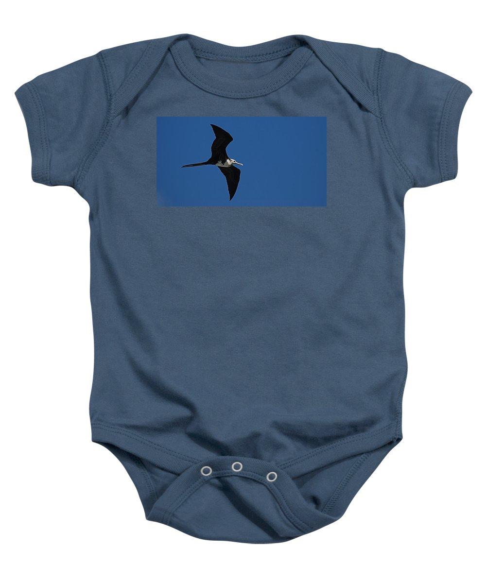 Bird Baby Onesie featuring the photograph Bird by Galeria Trompiz