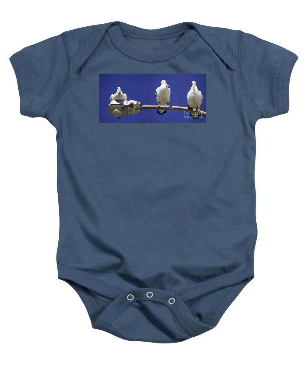 Australian White Pelicans Baby Onesie featuring the photograph Three Pelicans On A Lamp Post by Avalon Fine Art Photography