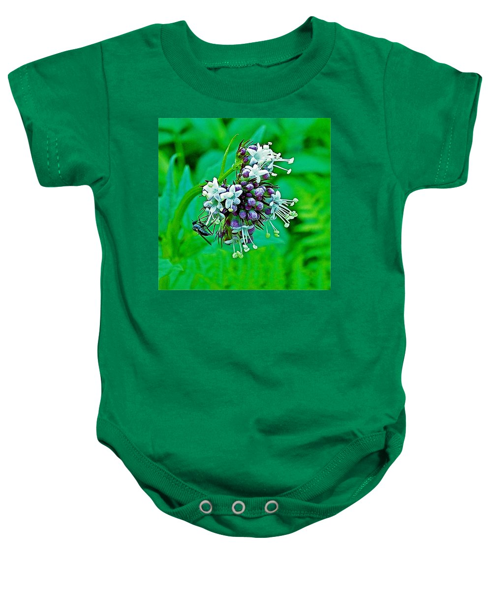 Wild Mint On Great Glacier Trail In Glacier National Park- Baby Onesie featuring the photograph Wild Mint On Great Glacier Trail In Glacier National Park-british Columbia by Ruth Hager