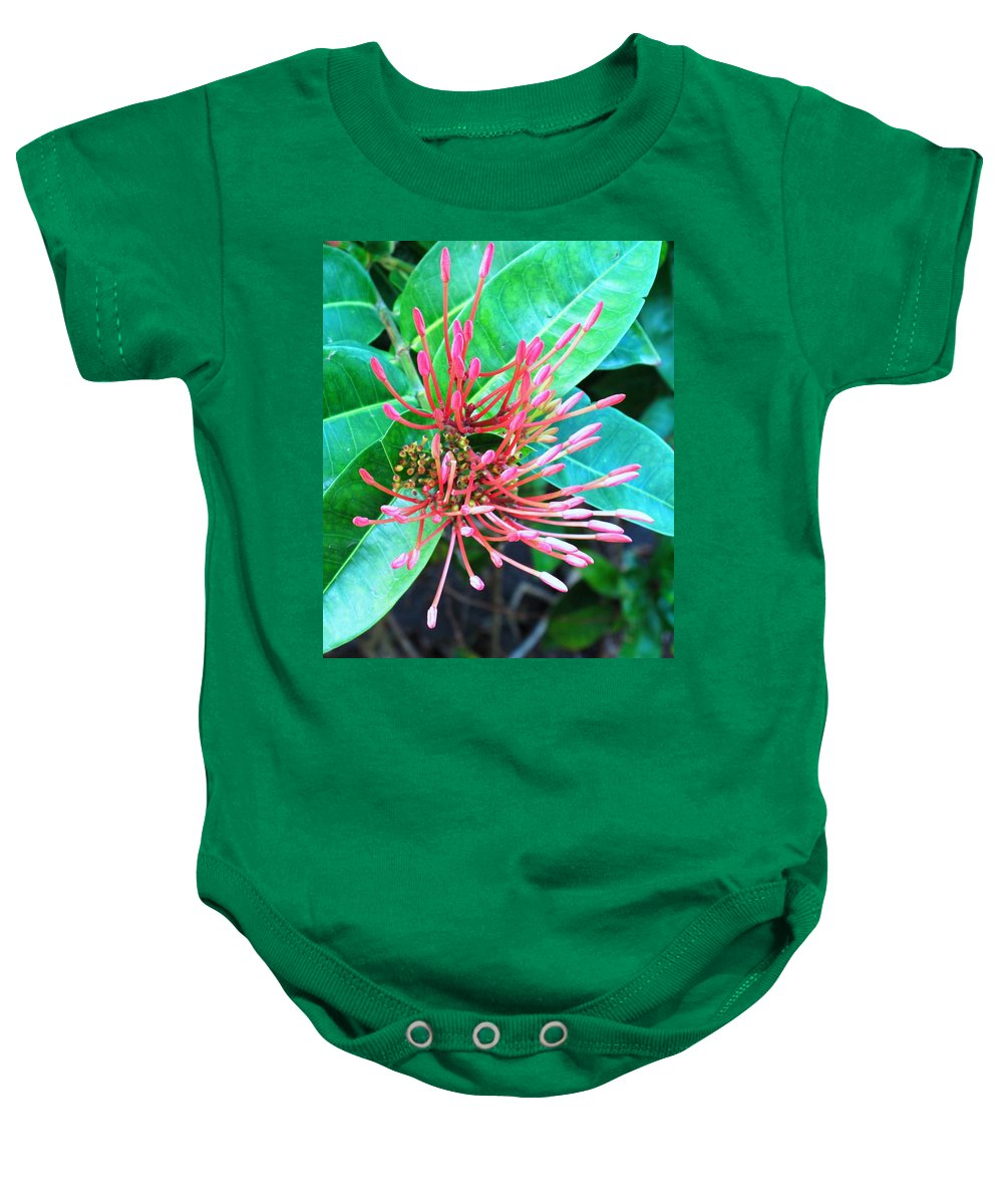 Flower Baby Onesie featuring the photograph Delicate Pink Flower by Ian MacDonald