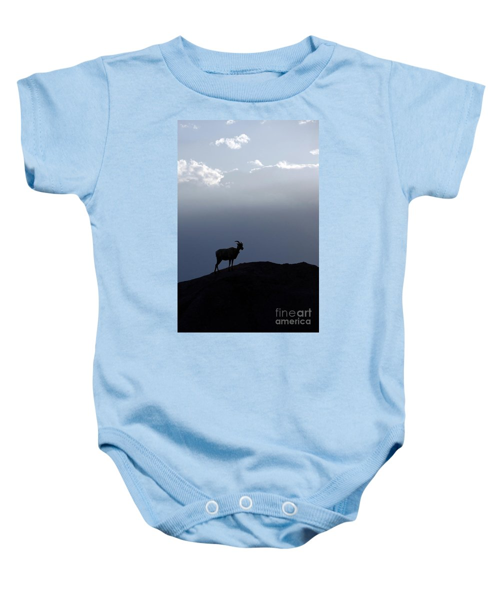 Badlands National Park Baby Onesie featuring the photograph Big Horned Sheep Badlands National Park by Jason O Watson