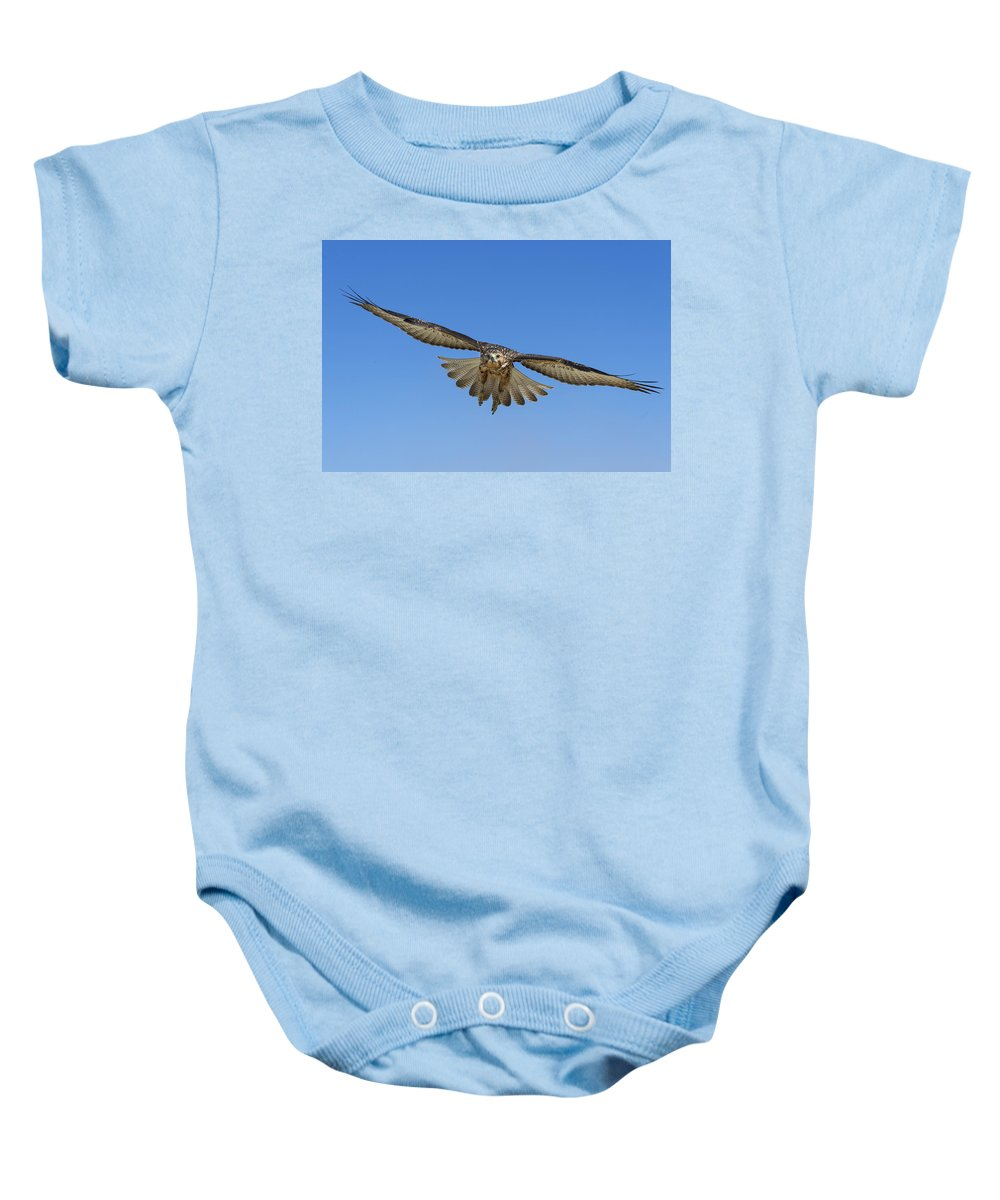 531726 Baby Onesie featuring the photograph Galapagos Hawk Flying Alcedo Volcano by Tui De Roy