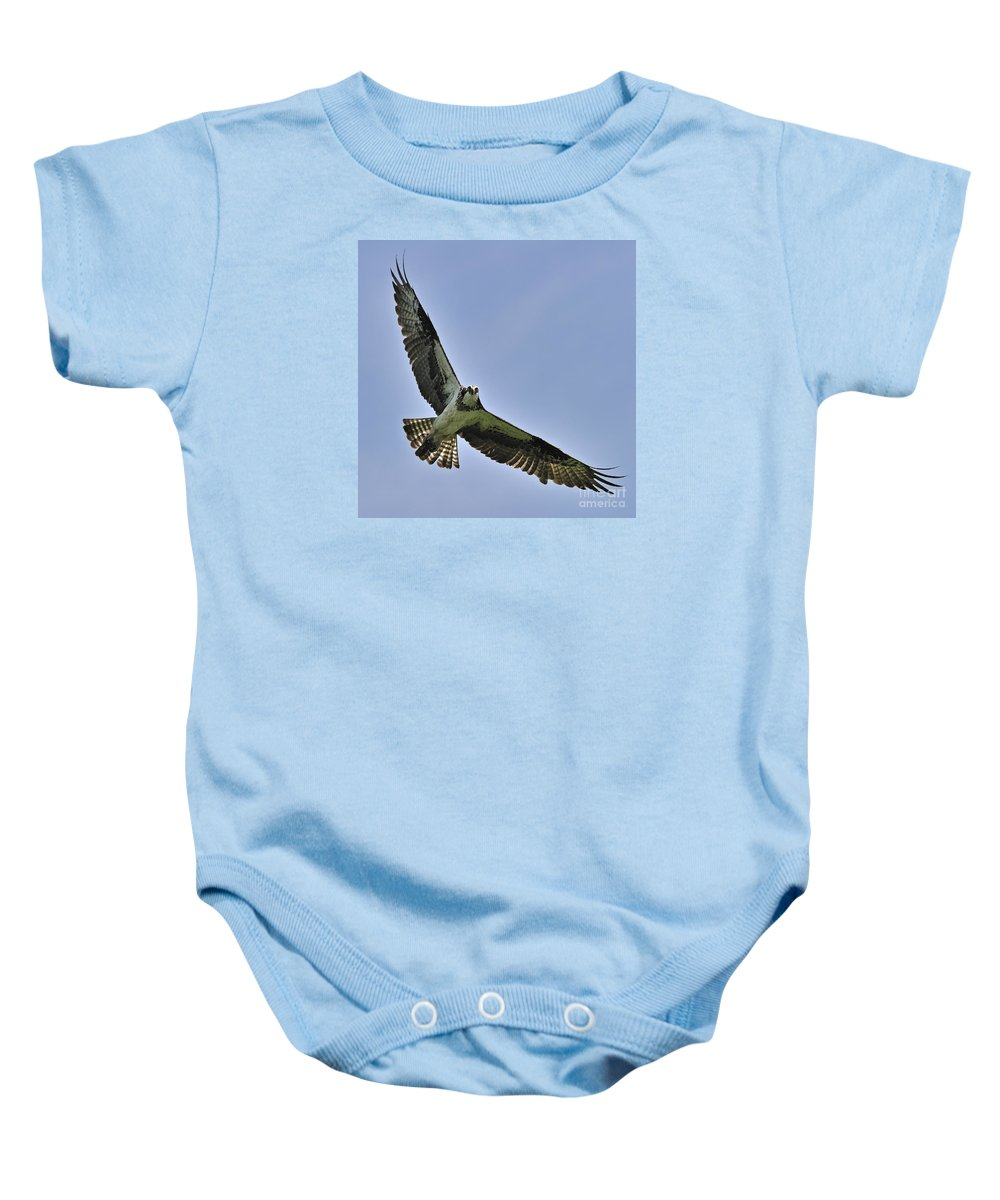 Osprey Baby Onesie featuring the photograph Hey You... by Nina Stavlund