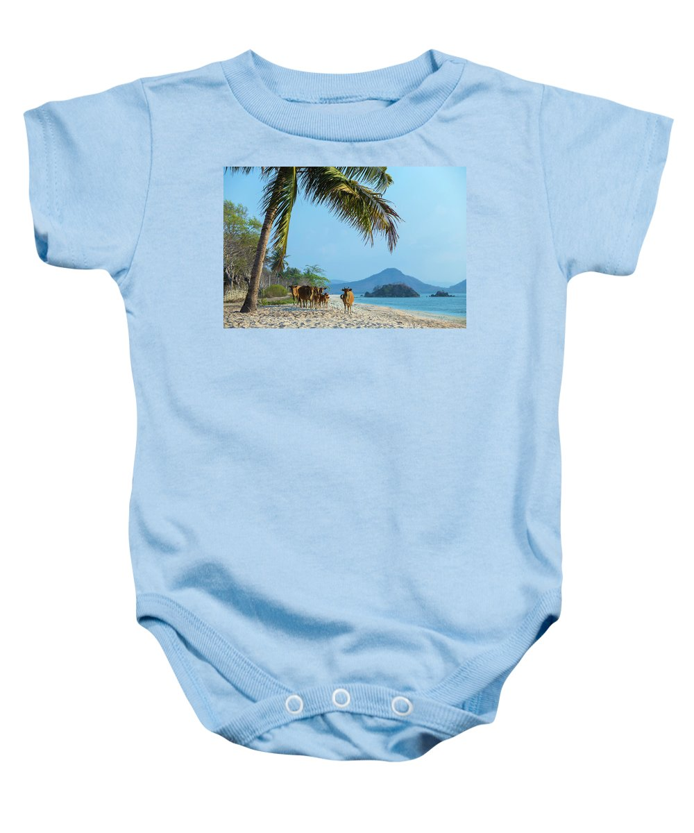 Waters Edge Baby Onesie featuring the photograph A Small Herd Of Cows by Konstantin Trubavin