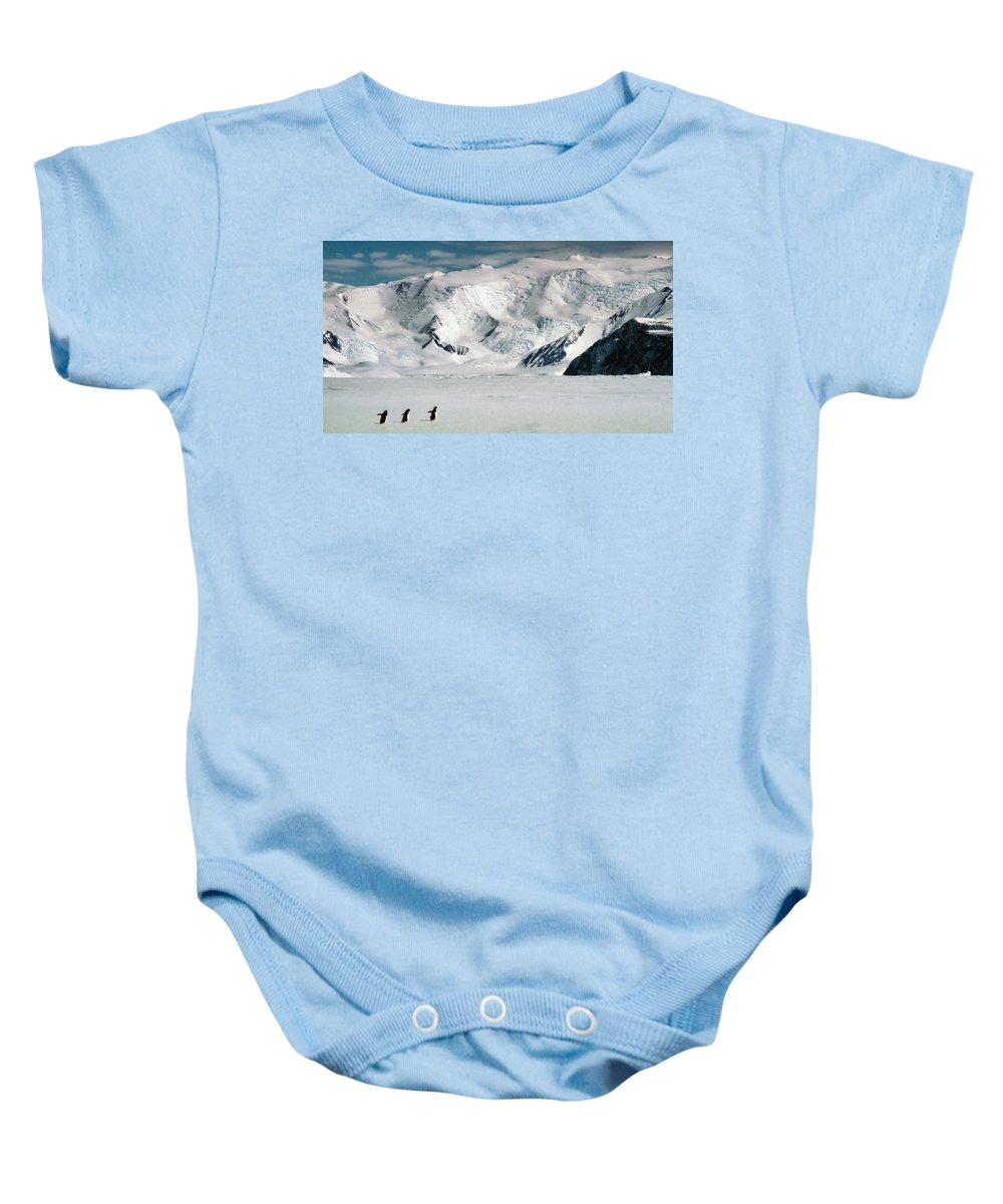 Black Baby Onesie featuring the photograph Adelie Penguins Trekking On The Ice by Carole-Anne Fooks