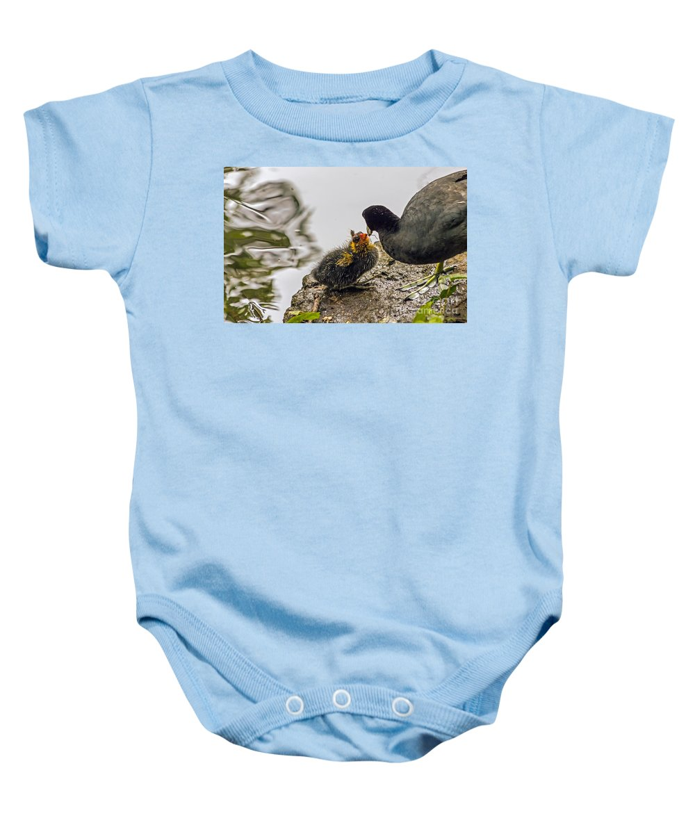 American Coot Baby Onesie featuring the photograph American Coot Feeding Chick by Kate Brown