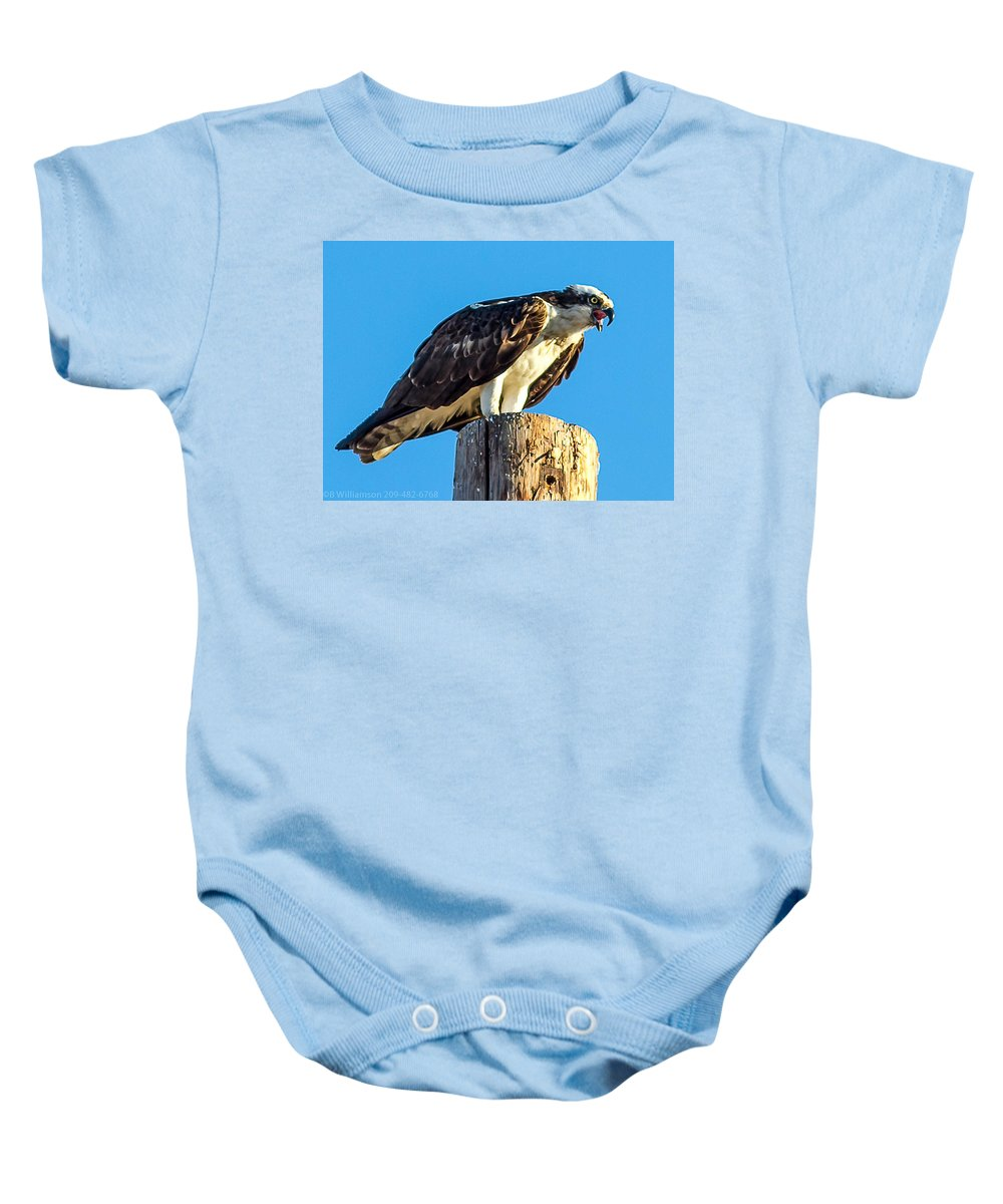Osprey Baby Onesie featuring the photograph An Osprey Calling by Brian Williamson