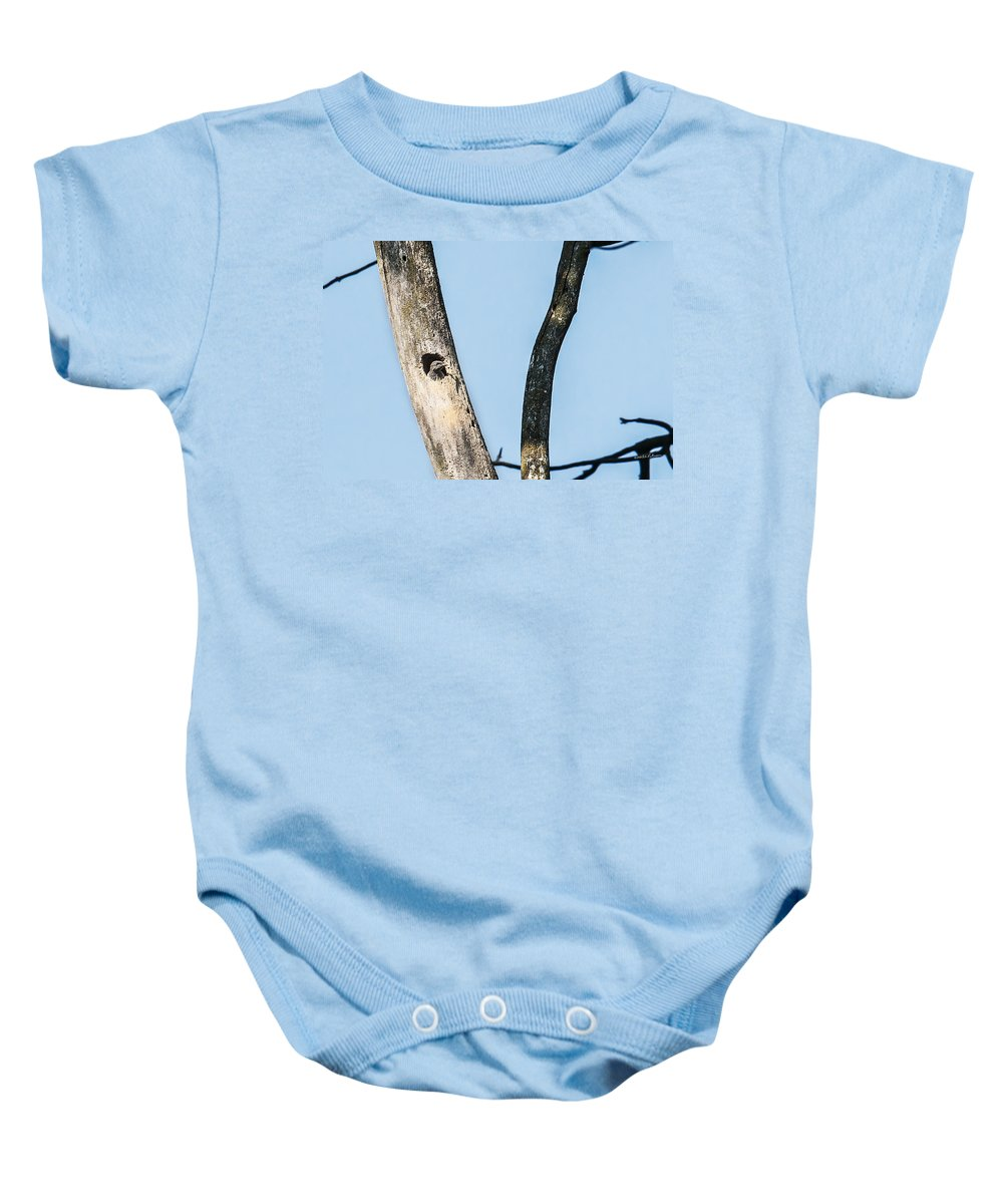 Heron Heaven Baby Onesie featuring the photograph Baby Red-headed Woodpecker by Edward Peterson