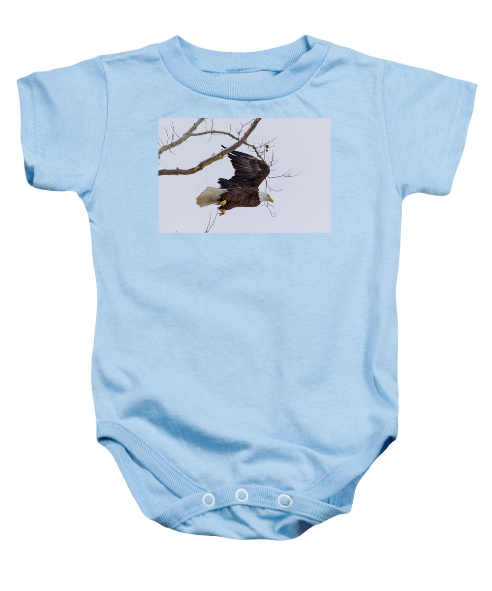 Bald Eagle Baby Onesie featuring the photograph Bald Eagle In Flight by Michael J Samuels