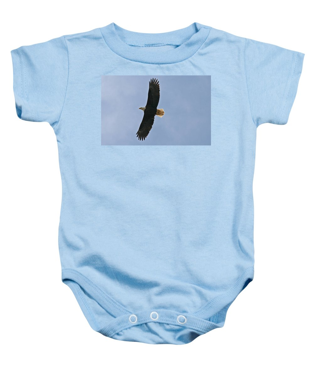 Eagles Baby Onesie featuring the photograph Bald Eagle In Sandspit Bc by Elizabeth Rose