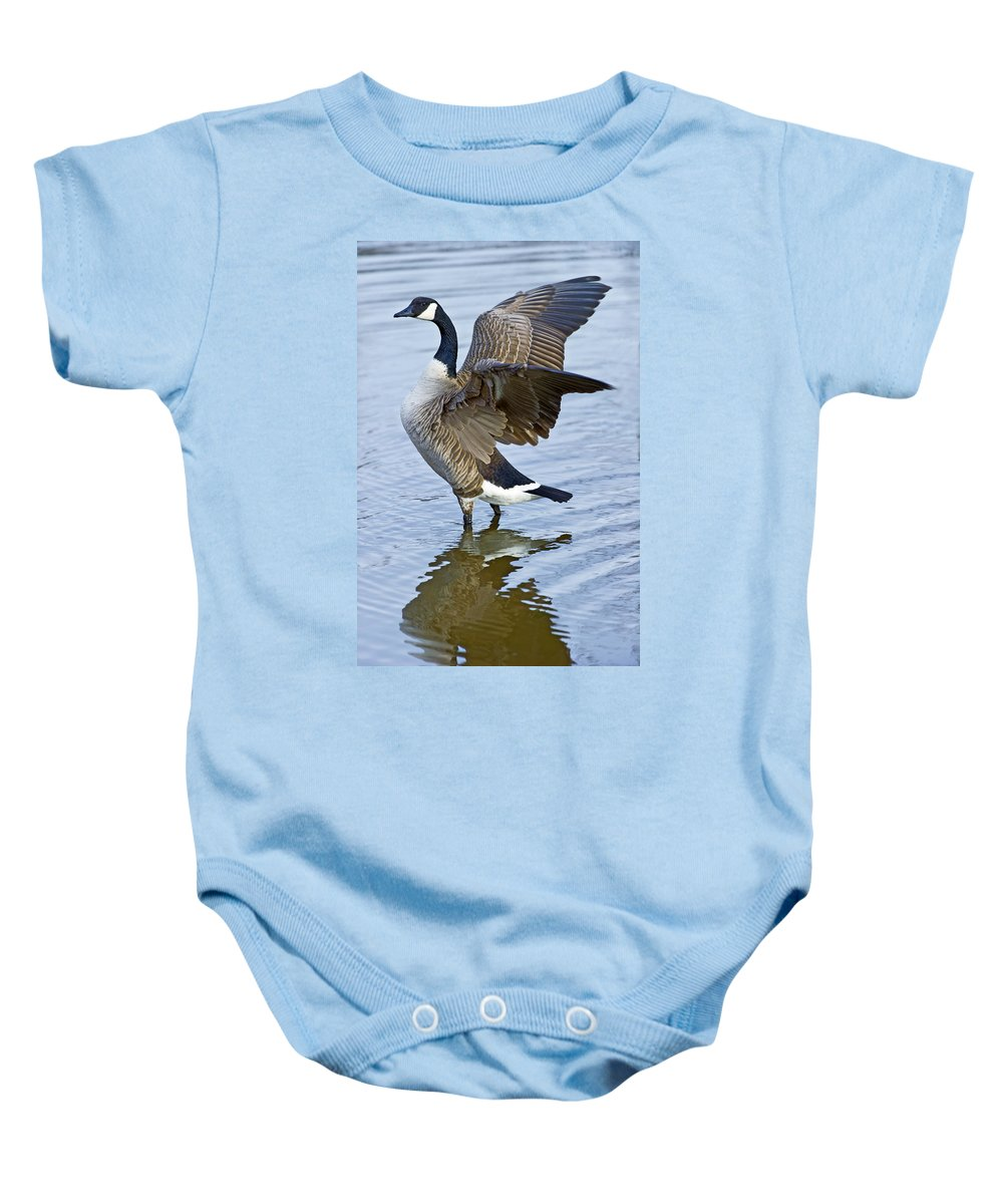 Canadian Baby Onesie featuring the photograph Canadian Goose Stretching by Gary Langley